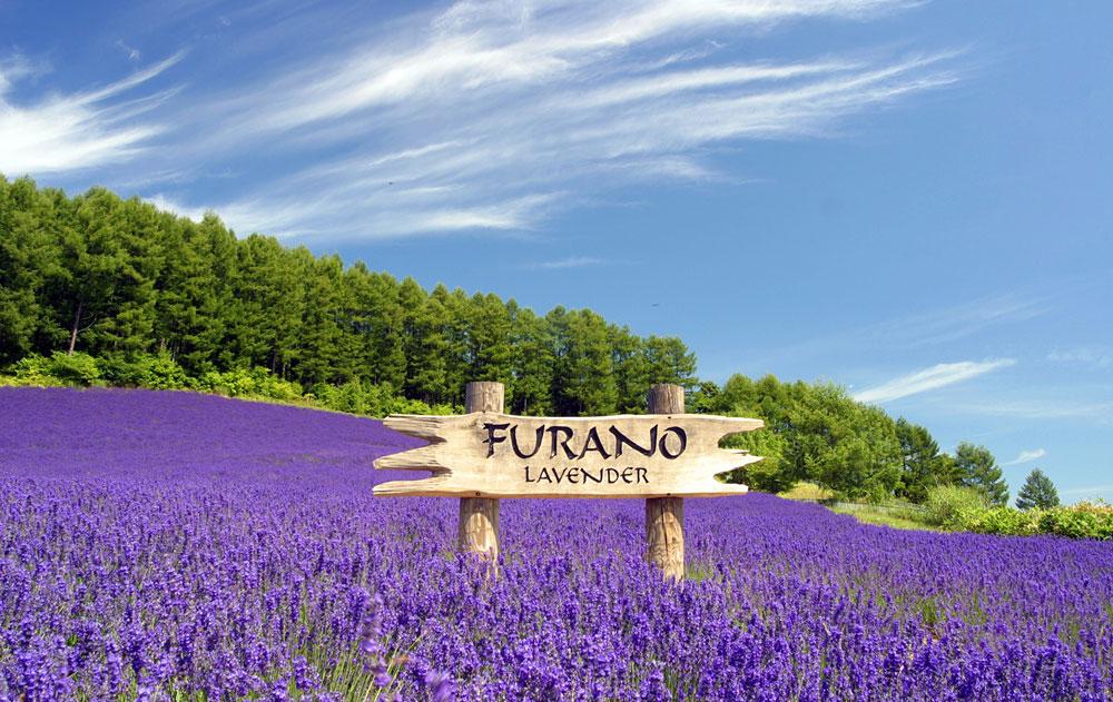 เมืองฟุราโนะและบิเอ (Furano - Biei)